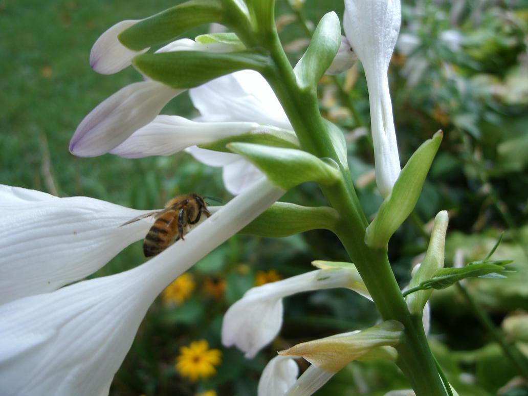 Bee by AndreBanerjee