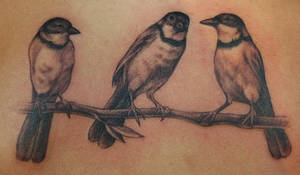 birds of a branch