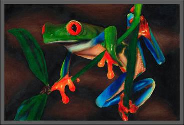 Color Pencil Frog 1 by DrydenFireGod