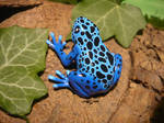 Blue Poisoned Dart Frog - Lifesize Pendant