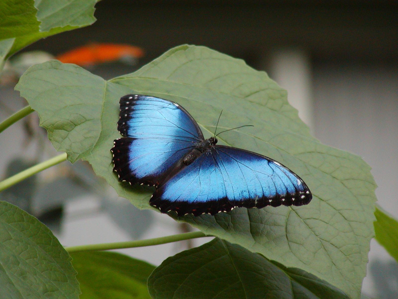 Butterfly 2 by jxp3397