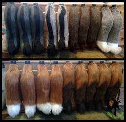 Canine Tails FOR SALE