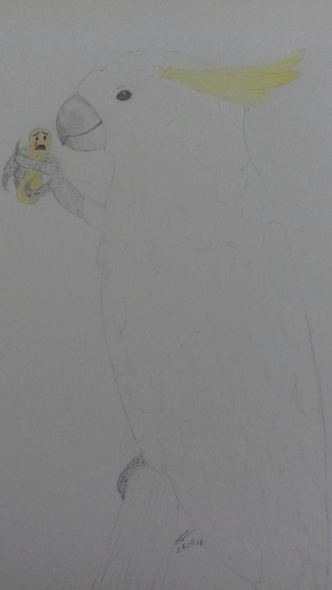 Perroquet Cacatos  by ABDCrochet