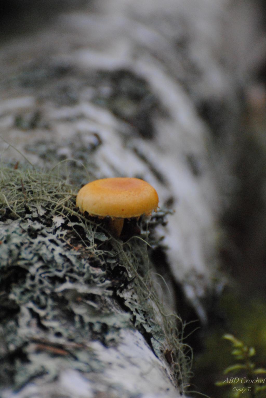 Mushroom by ABDCrochet