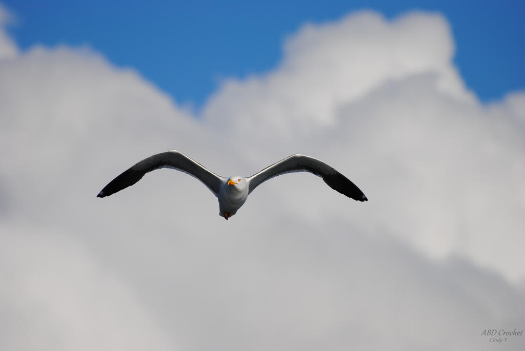 Seagull by ABDCrochet