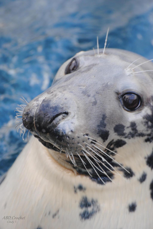 Wild Seal by ABDCrochet