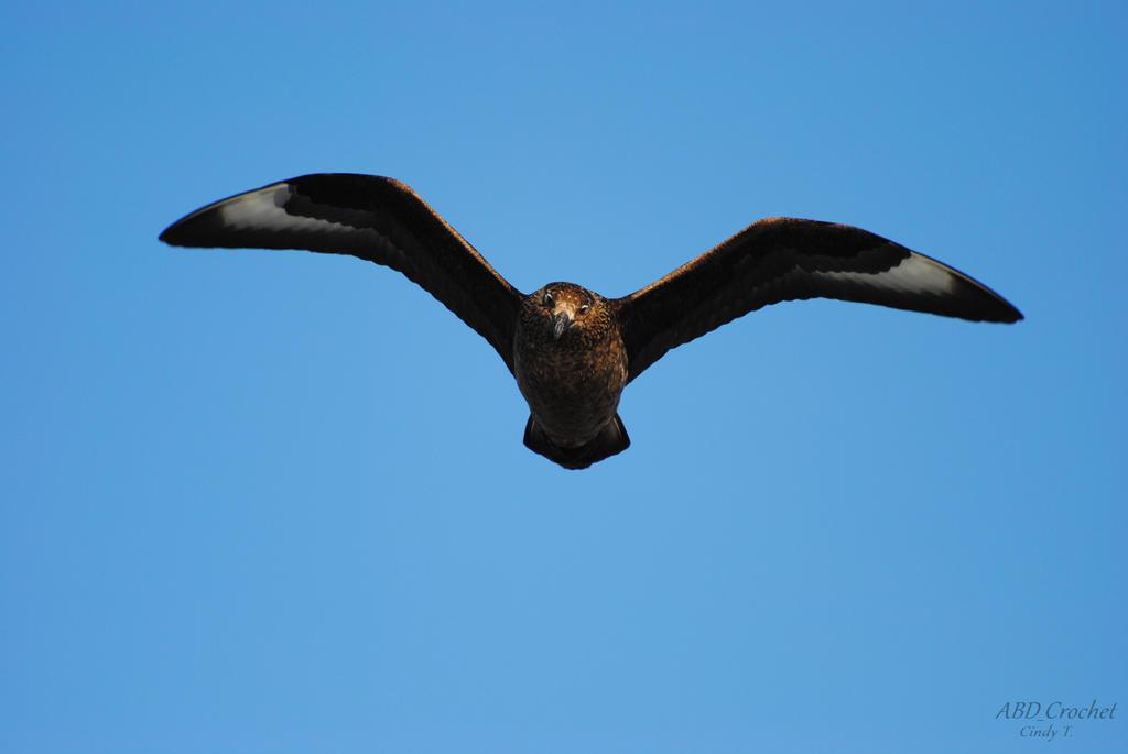 Sea Bird by ABDCrochet