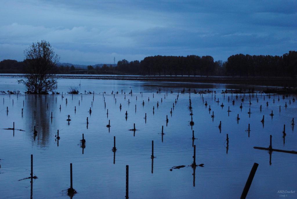 Flood - Vines underwater by ABDCrochet