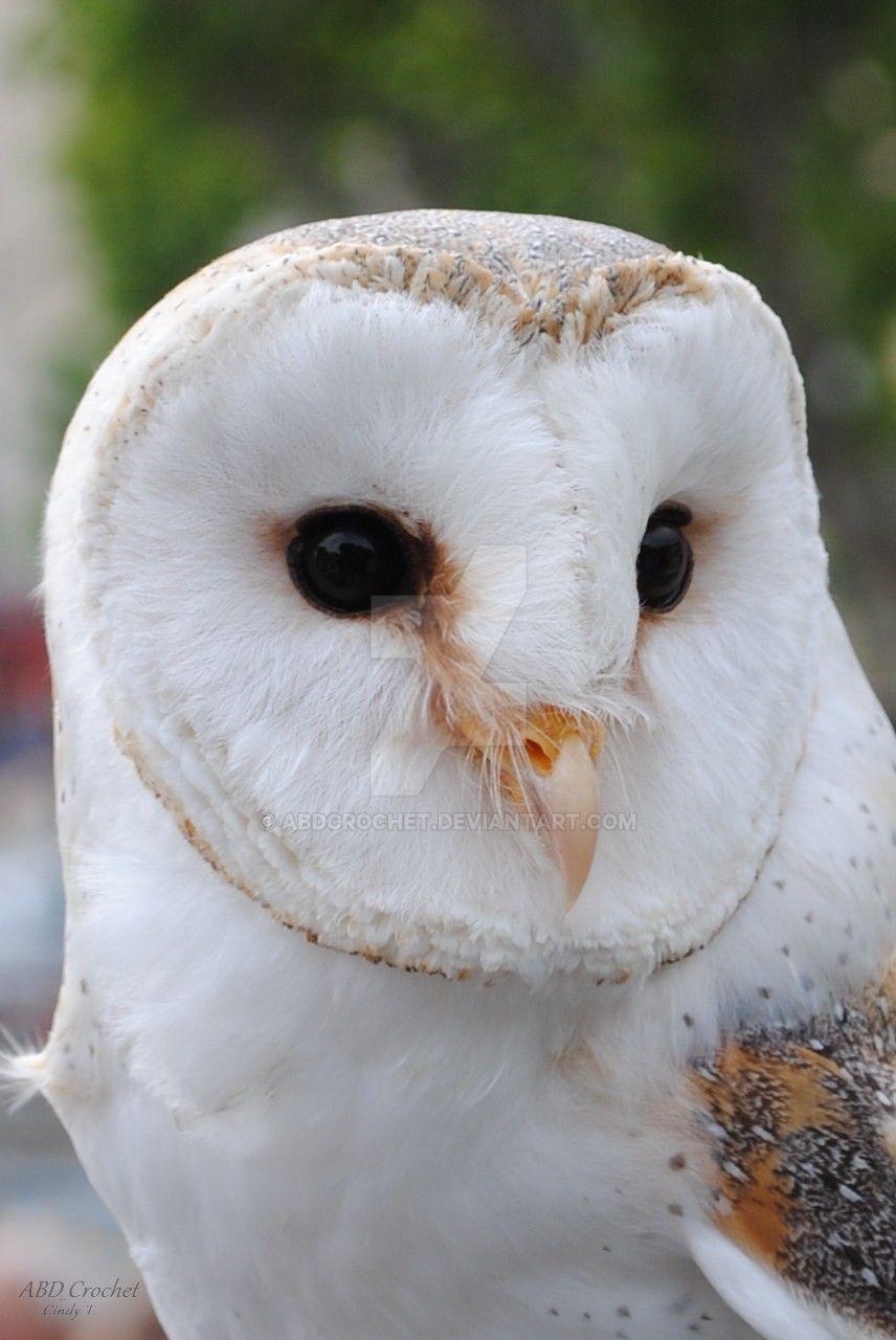 Barn Owl by ABDCrochet
