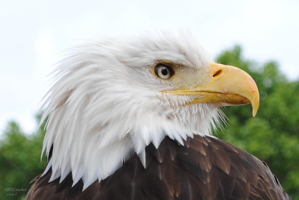 Royal Eagle by ABDCrochet