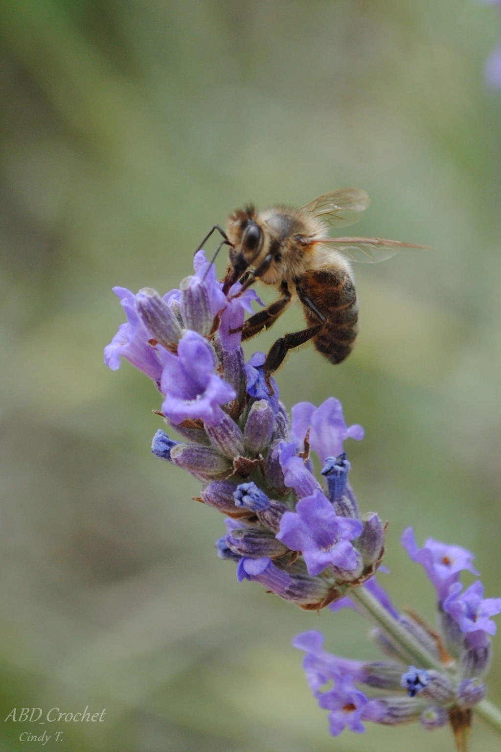 Bee by ABDCrochet