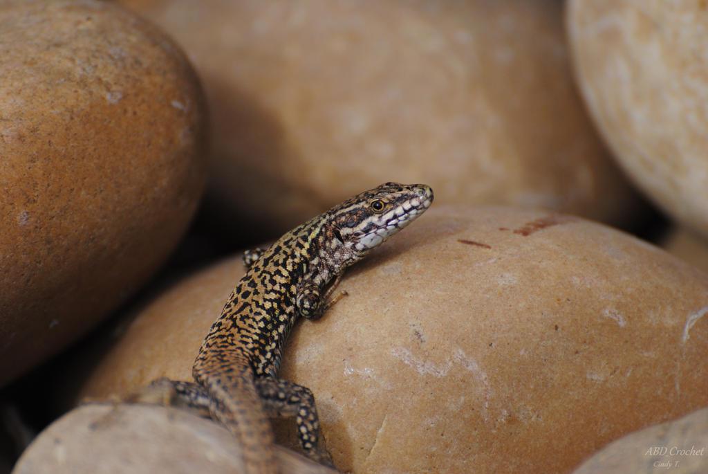 Lizard by ABDCrochet