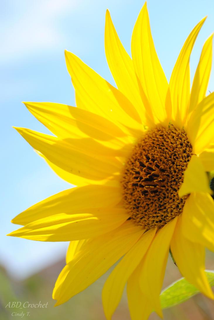 Sunflower by ABDCrochet