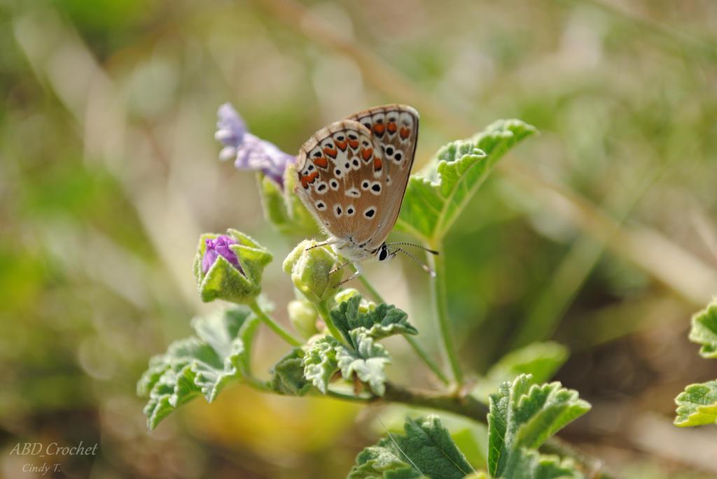 Butterfly by ABDCrochet