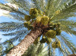 green palm blue sky