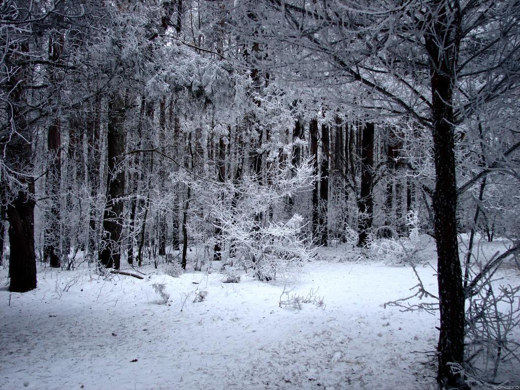 Narnia Forest By Kociorro On DeviantArt