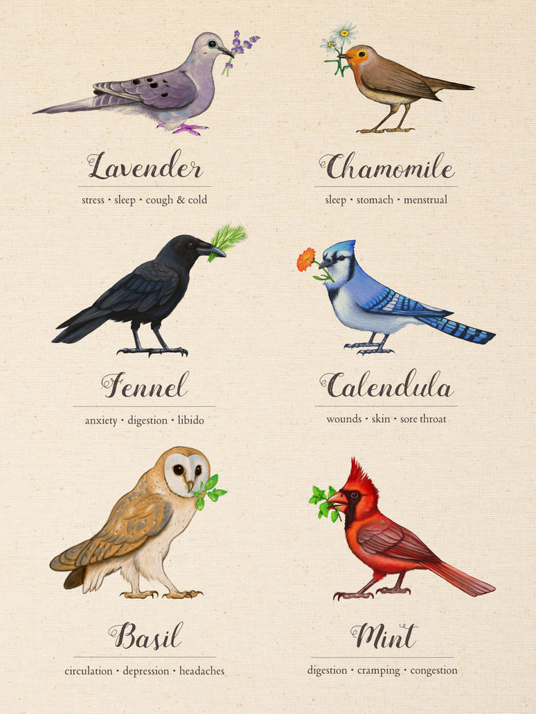 Birds, Herbs, and their Uses by MonicaMcClain