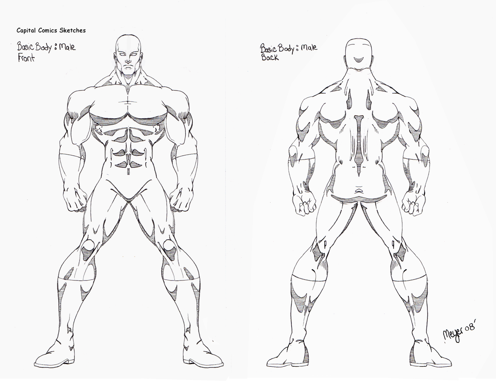 Outline the anatomy of muscle in the whole body