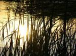 Colden Pond Summer