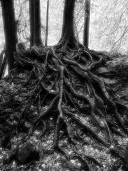Sleepy Hollow Tree by angelicque