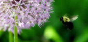 Romancing The Bee III