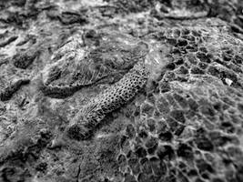 Devonian Period Fossil VI by angelicque
