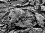 Devonian Period Fossil XVII