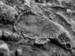 Devonian Period Fossil XX