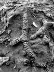 Devonian Period Fossil XXI