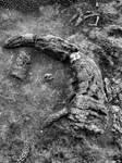 Devonian Period Fossil XXV
