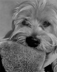 Dog by jourixia