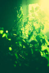 The Green 55/365 by Tall-Tale-Memory