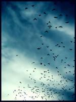 Sky by poezja