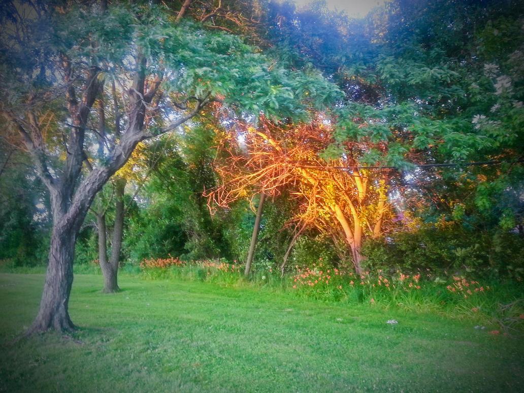 The Golden Tree by BilltJoe