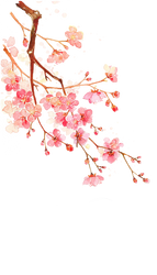Cherry blossoms PNG #7 by AugT30
