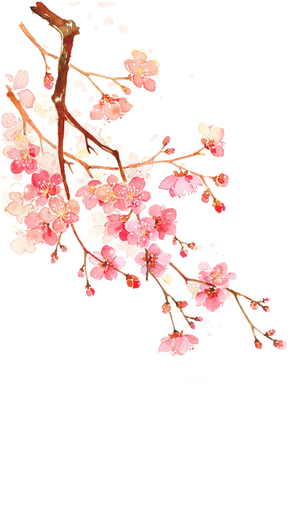 Cherry blossoms PNG #7