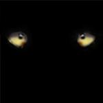 Wolf eyes2 by Davecub