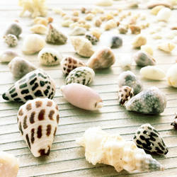 ..Okinawa Seashells.. by koruldia