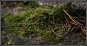 Moss by littledubbs