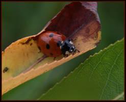 Ladybug by littledubbs