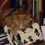 Zaphod is a cozy cat