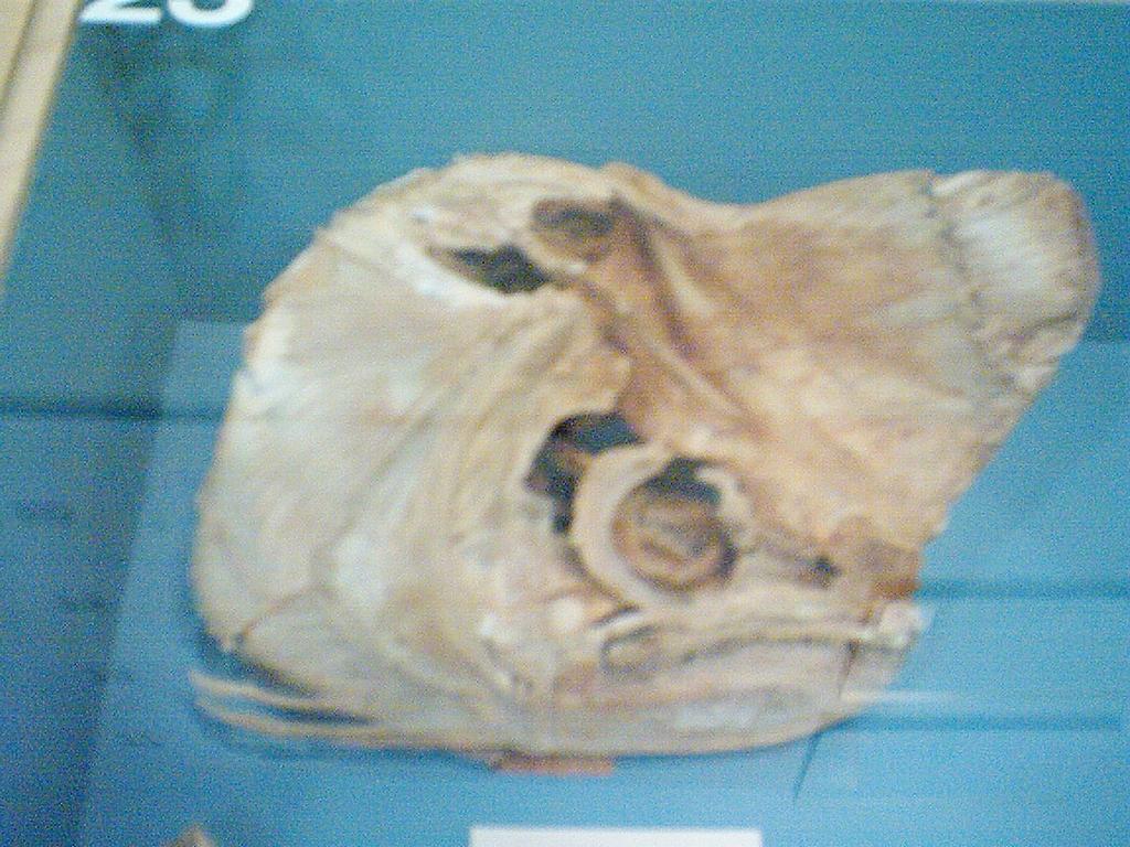 Weird Fish Skull 5