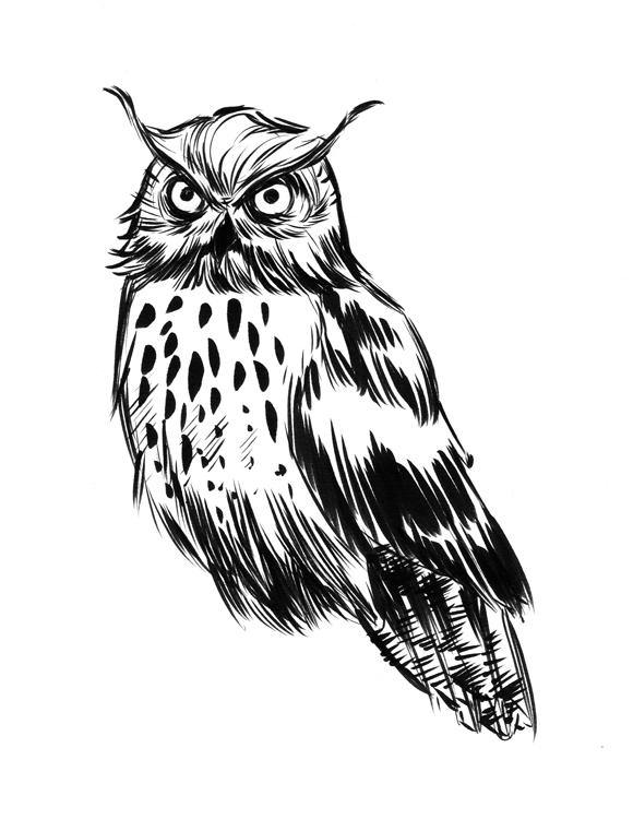 Owl sketch by elena-casagrande