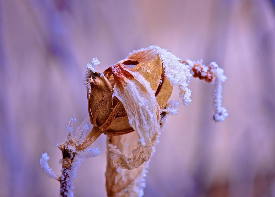So Cold by error413