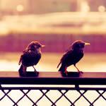 bird watching by Laura1995