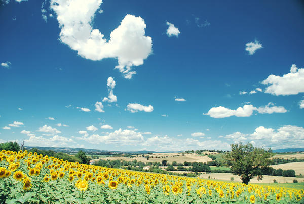 tuscany by Laura1995