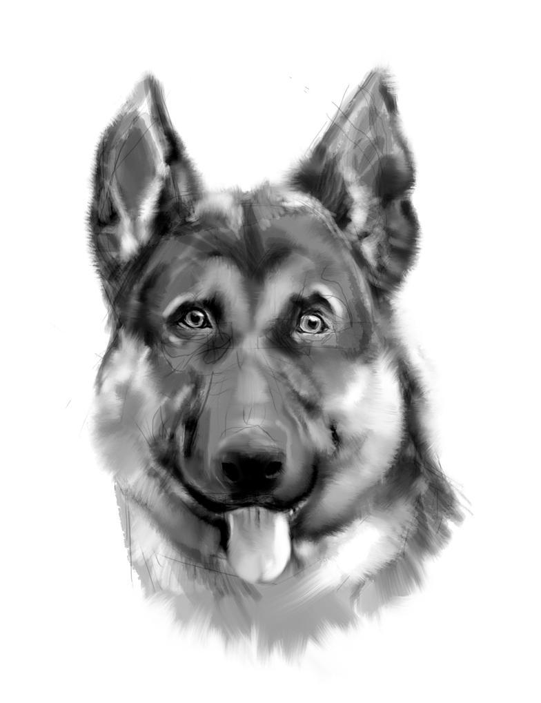 Must see German Shepherd Chubby Adorable Dog - cute_chubby_german_shepherd__3_by_basilisk193-d4qkslw  Trends_343818  .jpg