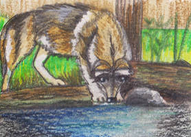 trinkender Wolf by Ka-Kind