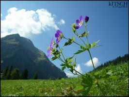 kITSCH by fotoguerilla