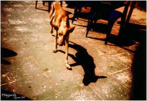 Strassenhund by fotoguerilla